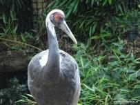 Aqua Zoo (Leeuwarden) 96