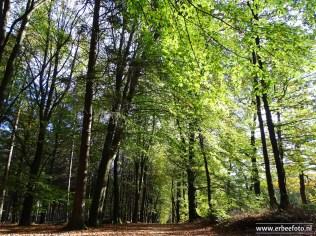 Landgoed Mensinge - Herfst (08)