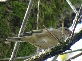 Landgoed Mensinge - Herfst (11) Vogeltje