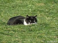 kat (01)