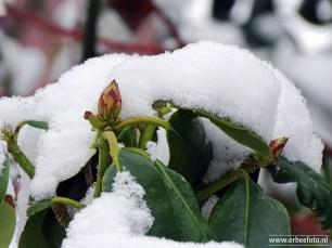drachten winter 01