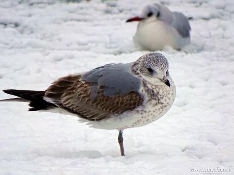 vogels kiryat onoplein 02