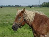 erbeefoto_Paard (Den Ham)