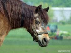 erbeefoto_Paard (Saaksum) 02
