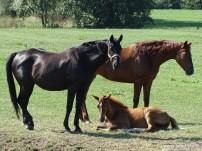 ErBeeFoto_Paarden (Doezumertocht)