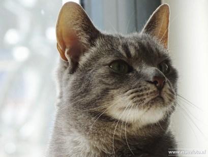 Kattencafe Op Zn Kop 04