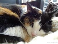 Kattencafe Op Zn Kop 07