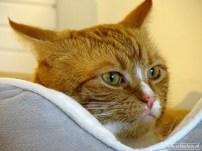 Kattencafe Op Zn Kop 09