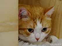 Kattencafe Op Zn Kop 11