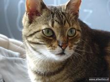 Kattencafe Op Zn Kop 15