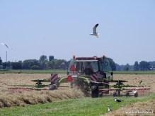 Tractor (bij Niehove) op het land 01