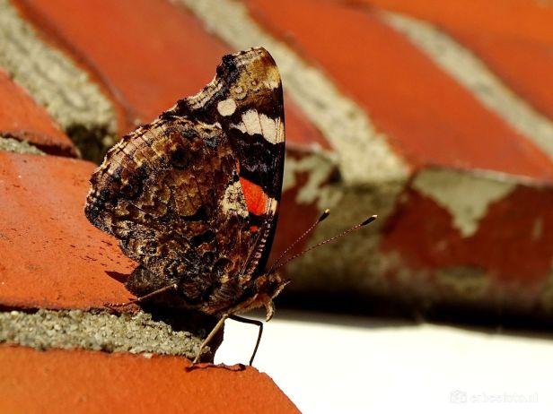 Vlinder op de muur