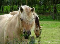 Paarden bij Roodehaan