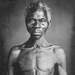 Renty Taylor Delia Slavery Slavernij Portretrecht Harvard