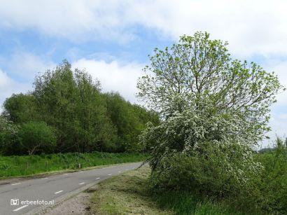 Weg van Den Horn naar Hoogkerk