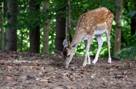 Bambi_2