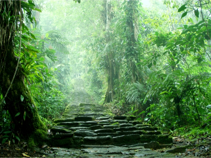 The amazon rainforest alone provides a habitat for over 40,000 plant species!. Mysteries Unravelled The Unique Plant Insect Food Web Of Tropical Forests Erc European Research Council