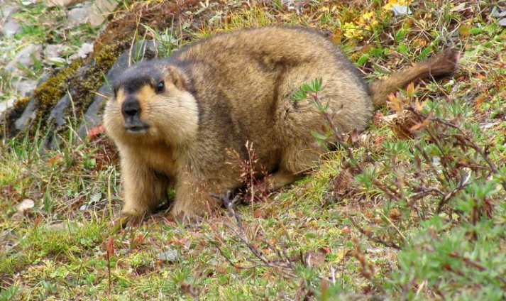 Sakteng Wildlife Sanctuary in Bhutan