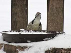 Fakopáncs madáretetőn