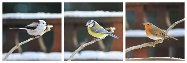 Vendégek a madáretetőn