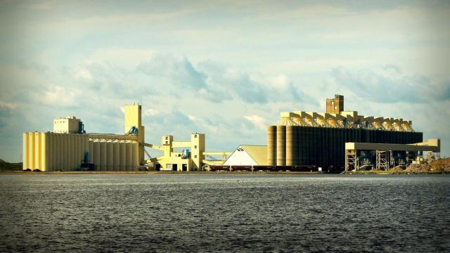 Беларусь запретила вывоз зерна из страны