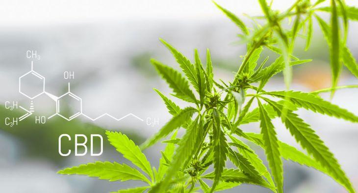 cannabis et CBD