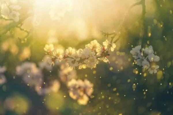 Aprende como diferenciar las plantas y los arboles de primavera