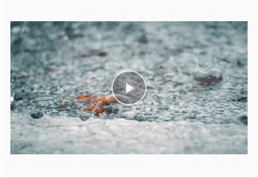 SPUDFilms
