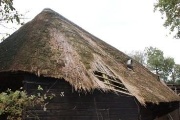 Herstel rieten dak - foto Philip Heitkamp