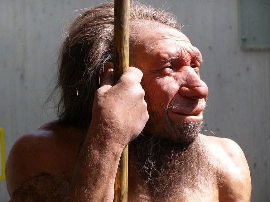 Reconstructie Neanderthaler