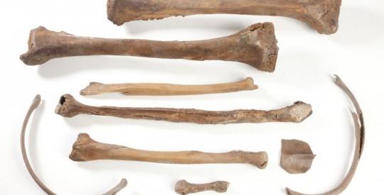 Archeologisch DNA geeft een nieuwe lens op het verleden