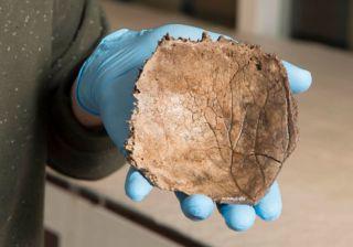 Schedelfragment oudste Nederlander uit IJstijd gevonden
