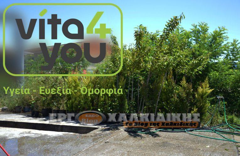 Εθελοντική δενδροφύτευση από την ομάδα του «Vita4you» στην Αρναία.