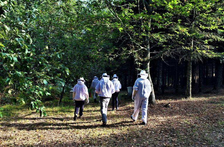 Πολωνοί & Γερμανοί trekking specialists μετατρέπονται σε Έλληνες μελισσοκόμους