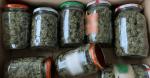 Συνελήφθη 19χρονος που έκρυβε βάζα με χασίς σε θαμνώδη περιοχή στην Χαλκιδική