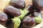 aubergines WP