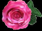 fleur accueil trans