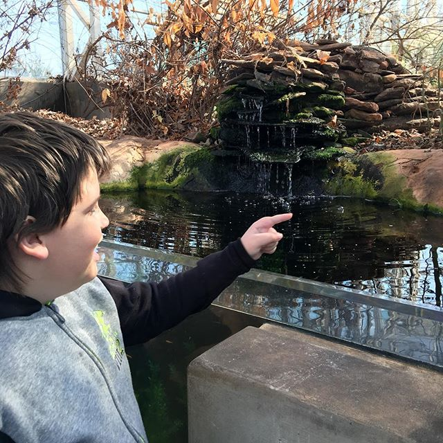 Harley pointing out some turtles in the pond.