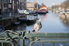 amsterdam-85