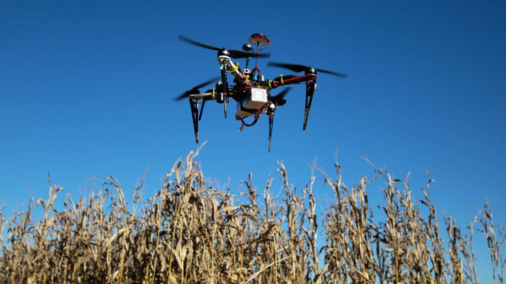 Photo of a drone hovering above a corn field.