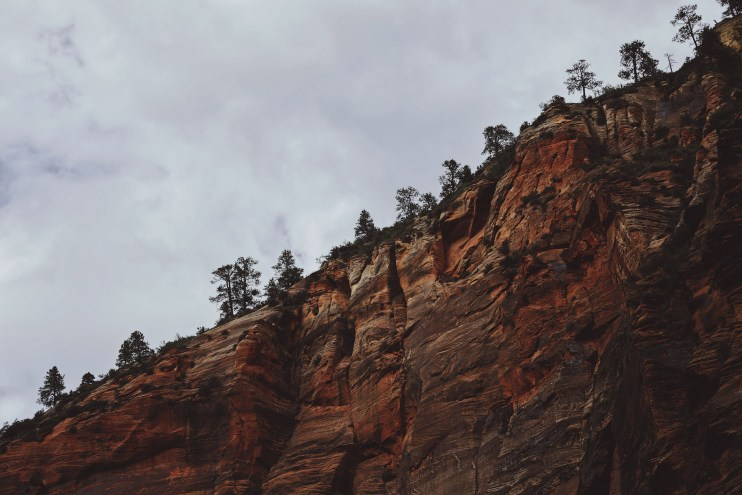 A photo of a treeline over a red dirt mountainside.