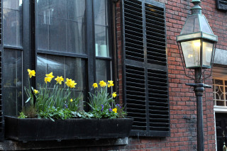 flowers and lamp IMG_1524_1