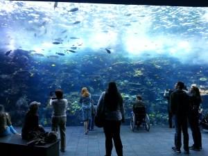 Huge aquarium wall!