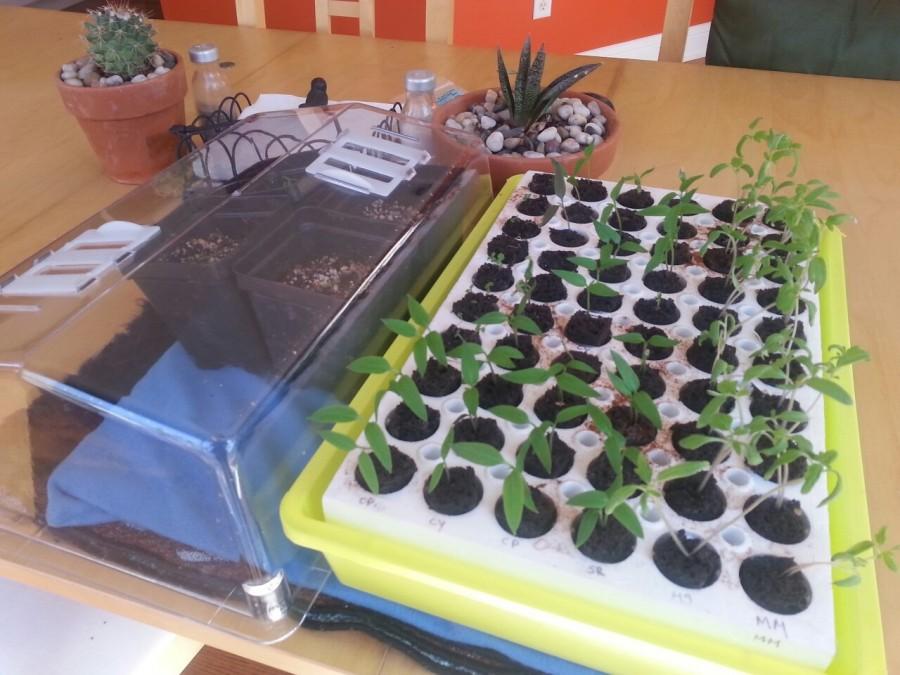 bio dome park seeds