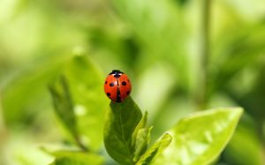 helpful garden insects