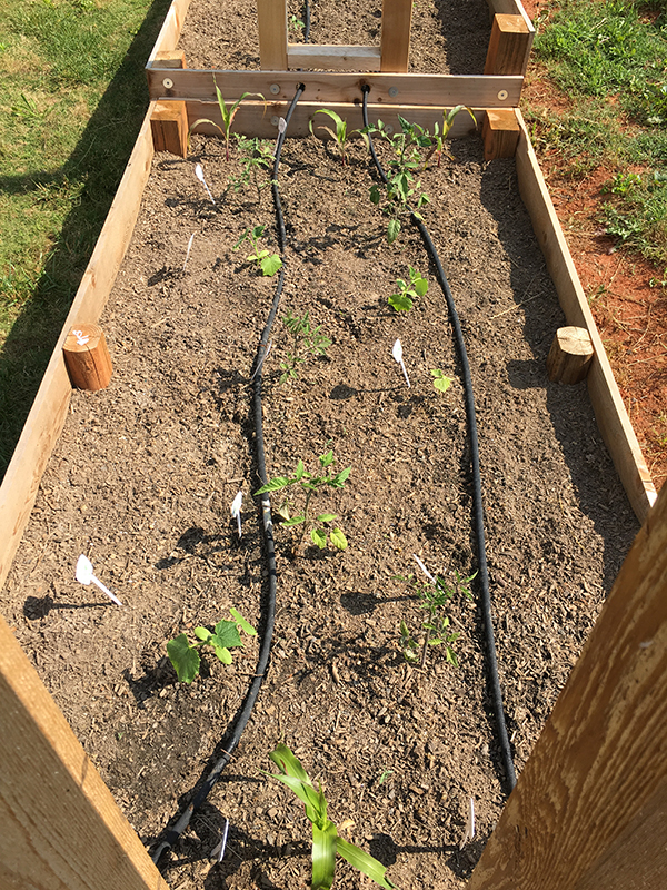 How to install a soaker hose irrigation system erica rascon - Diy drip irrigation systems ...