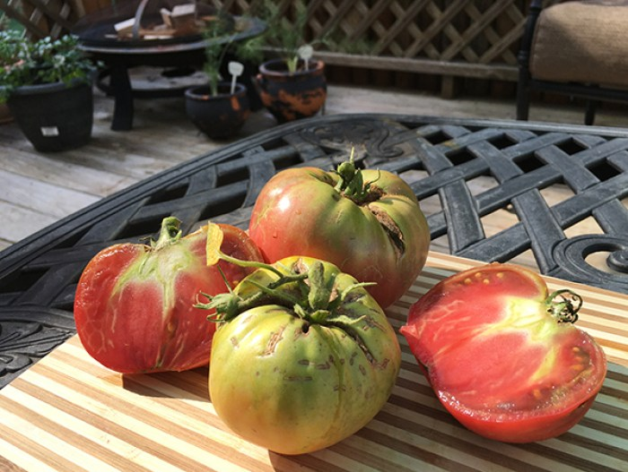 ugly heirloom tomatoes