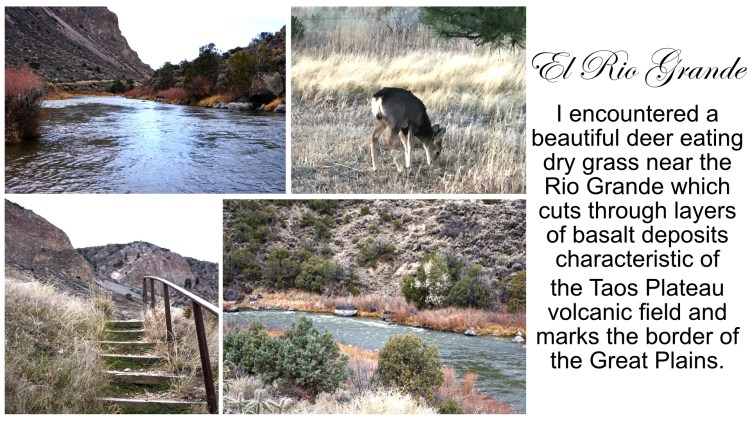 Close ups of Rio Grande, deer eating dry grass, stairs to Rio Grande shoreline, view of Rio Grande river bank, Taos, New Mexico, USA © 2018 ericarobbin.com | All rights reserved.