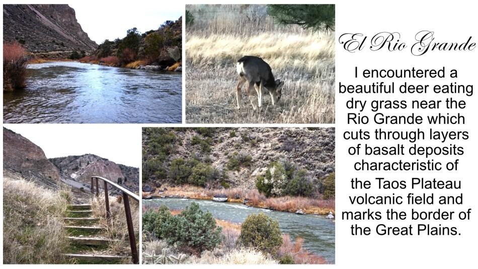 Close ups of Rio Grande, deer eating dry grass, stairs to Rio Grande shoreline, view of Rio Grande river bank, Taos, New Mexico, USA © 2018 ericarobbin.com | All rights reserved.