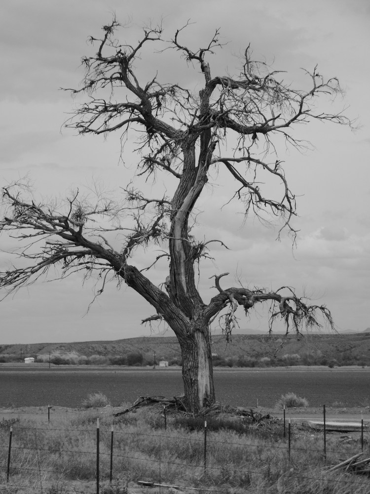 Old tree © 2018 ericarobbin.com | All rights reserved.